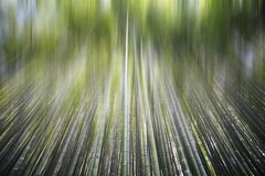 Bamboo forest with a road for adv or others purpose use Stock Photos