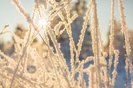Stock Photo of Snowy grass on sunny background