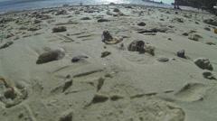 Hermit crabs walk away towards beach Stock Footage
