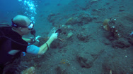 Stock Video Footage of Scuba diver taking video of cuttlefish on ocean floor