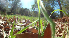 Snake point of view Stock Footage