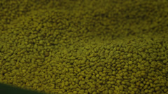 Green Coffee Beans Stock Footage