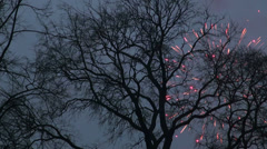 Salut, a branch of the tree Stock Footage