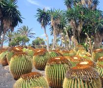 Cactus garden in fuerteventura Stock Photos