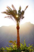 Sun through the palm leaves Stock Photos