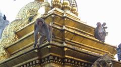 Sitting monkeys, at Swayambhunath monkey temple. Kathmandu, Nepal Stock Footage