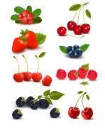 big group of fresh berries and cherries. vector illustration. - stock illustration