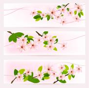 three spring banners with blossoming tree brunch with spring flowers. vector. - stock illustration