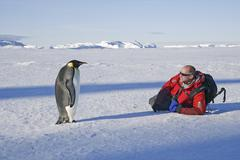 Mies makaa kyljellään jäällä, lähellä keisari pingviini seisoo motivoitu Kuvituskuvat