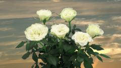 Time-lapse of opening white rose on clouds background 3a1 Stock Footage