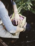 A young woman in a vegetable garden, carrying a basket with freshly harvested Stock Photos