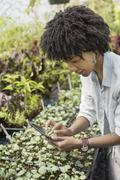 An organic horticultural nursery and farm outside woodstock. a woman holding  Stock Photos