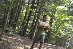 summer. a boy carrying firewood through the woods. - stock photo