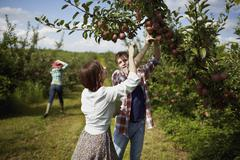 Rows of fruit trees in an organic orchard. a group of people picking the ripe Stock Photos