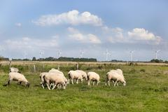 dyke sheep against windmills - stock photo