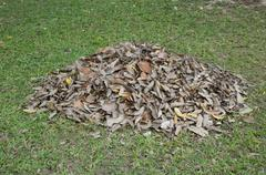 Pile of dry leaves Stock Photos