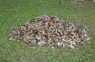 Stock Photo of pile of dry leaves