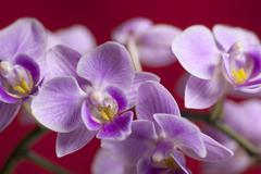 Closeup on colorful orchid Stock Photos