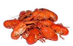 Pile of boiled crayfishes isolated on the white background Stock Photos