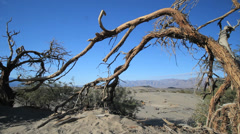 A decrepit tree in Death Valley, California Stock Footage