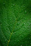 green leaf with water drops, texture background, macro - stock photo
