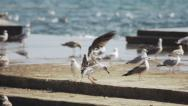 Stock Video Footage of Slow-Mo: Seagull Landing On Pier