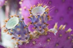 Macro shot of purple cactus Stock Photos