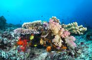 Stock Photo of colorful tropical reef with corals