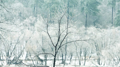 Ice Storm Raleigh, North Carolina Stock Footage