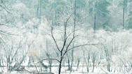 Stock Video Footage of Frozen Tree during Ice Storm in North Carolina