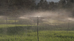 Water lawn agricultural sprinkler irrigation Stock Footage