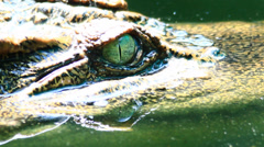 Moving of crocodile Stock Footage