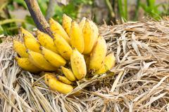 Stock Photo of cluster of banana