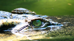 Danger crocodile Stock Footage