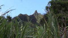Sugarcane blowing, Bali Hai Stock Footage