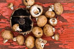 Fresh portobello and brown agaricus mushrooms Stock Photos