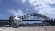 Stock Video Footage of Gull landing in slow motion with the Sydney harbour bridge at the background