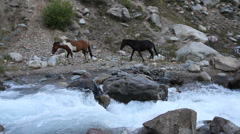 Horse and mountain river Stock Footage