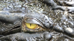 Big scary eye of a crocodile Stock Footage