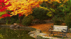 Park Bench by Pond in Autumn Stock Footage