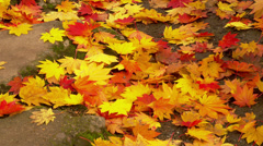 Fall Leaves on Ground Stock Footage