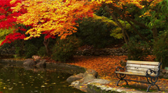 Park Bench by Pond in Autumn, Zoom Out - stock footage
