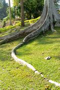 Tree roots in the garden Stock Photos