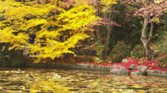 Joggers in Autumn Stock Footage