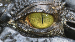 Big crocodile eye Stock Footage