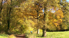 Walk in the autumn forest. Stock Footage