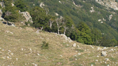 Aerial corsica mountain trees top Stock Footage