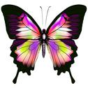 Stock Illustration of butterfly