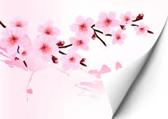 spring background with a blossoming sakura branch. vector illustration. - stock illustration