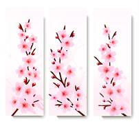 three spring banners with blossoming sakura branches. vector illustration. - stock illustration